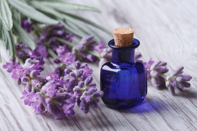 Rośliny i zioła w naturalnej pielęgnacji