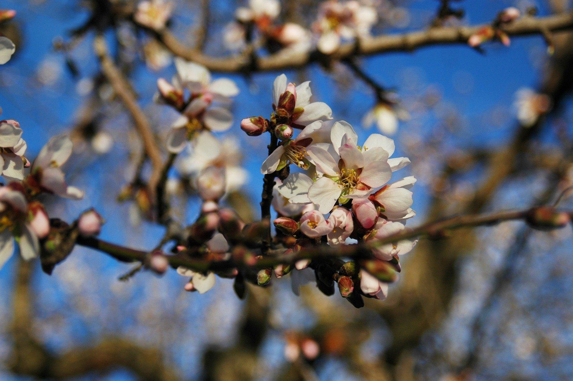 Olej ze słodkich migdałów - hit naturalnej pielęgnacji